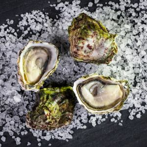 Kumamoto Oysters - Fresh